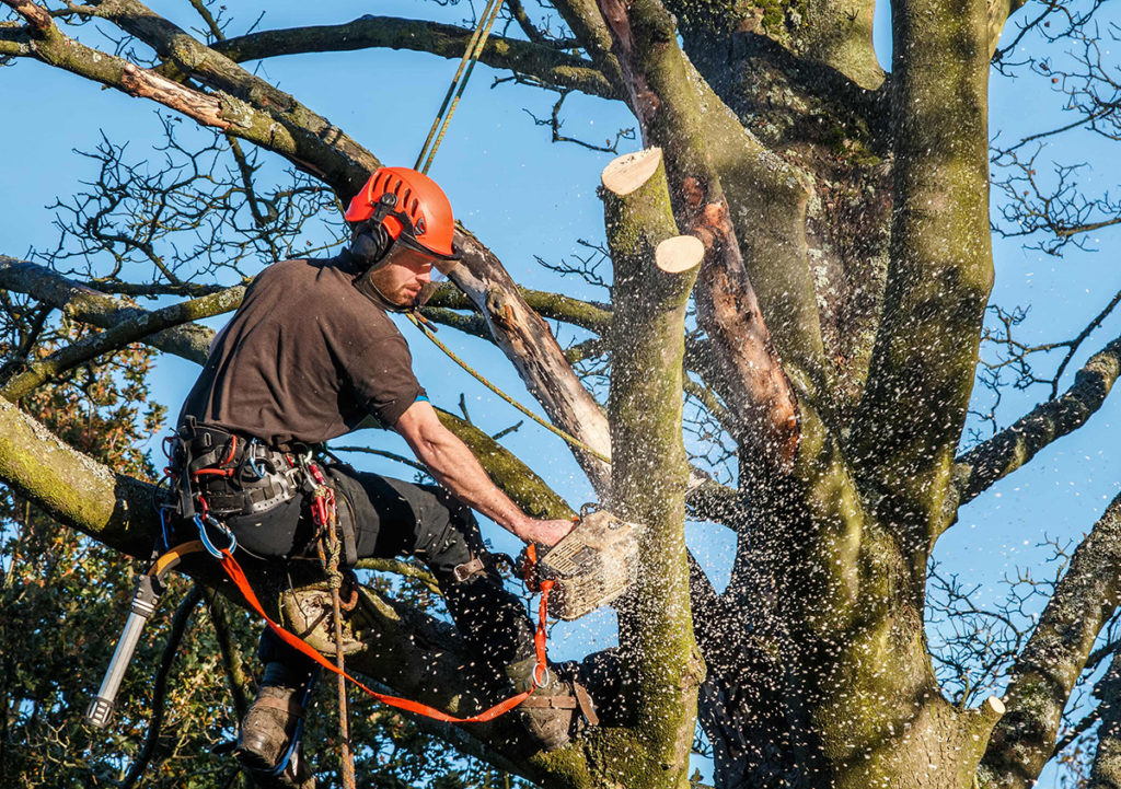 tree surgeons suffolk