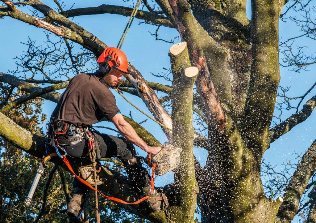 Tree Surgeons Suffolk