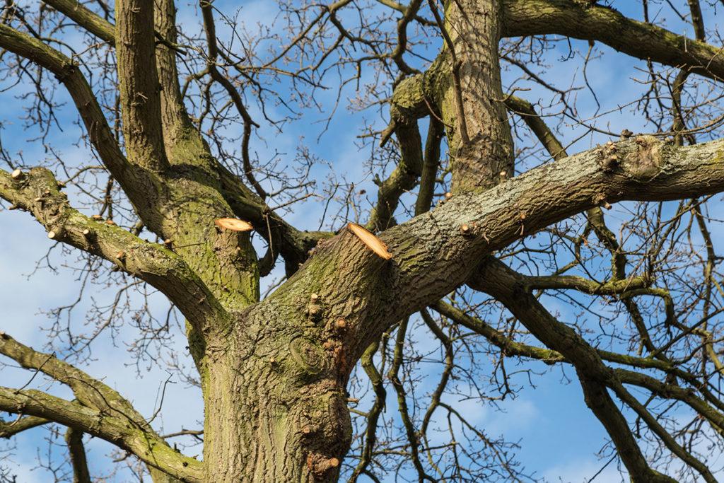 Tree Work Suffolk