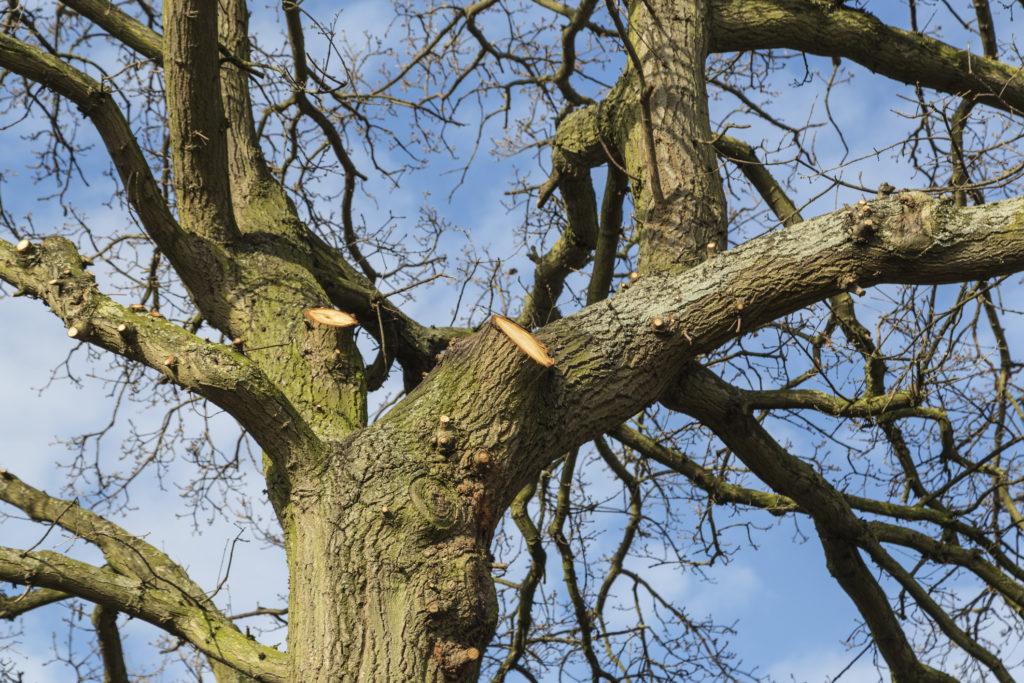 Tree Works Suffolk