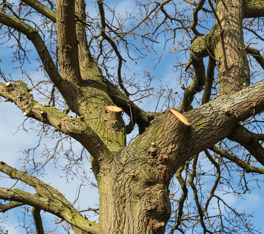 tree-works-suffolk